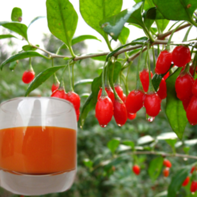100 Goji Berry Juice Concentrate The Lycium Chinese Of Ningxia